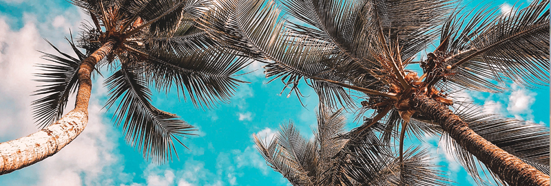 Submissions image for Summer 2020 Palm trees and blue sky